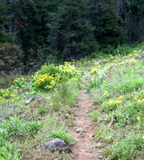 "The PCT runs on ""flower power"" in Oregon!"