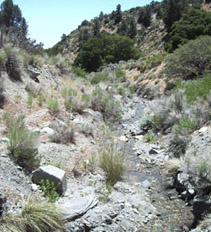 Tylerhorse Canyon creek