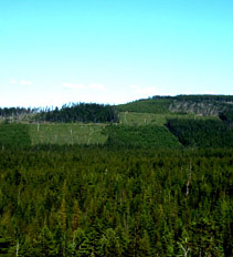 "Tree farm ""patchwork quilt"""