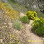 may13_trail2