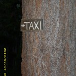 july17_3taxitree