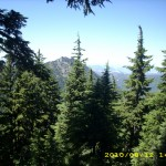 aug12_2forest