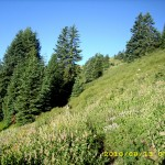 aug13_5greentrees