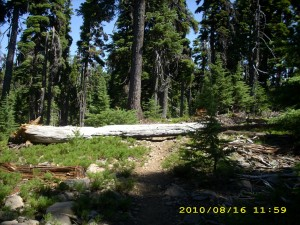 aug16_1forest