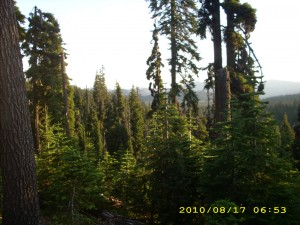aug17_2forest